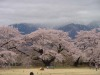 Sakurabizyutukan3
